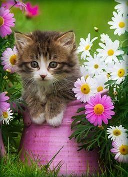 Kittens screenshot 4