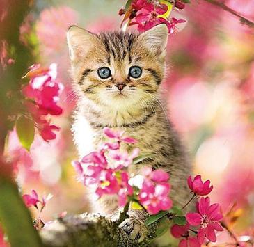 Kittens screenshot 5