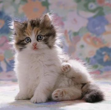 Kittens screenshot 6