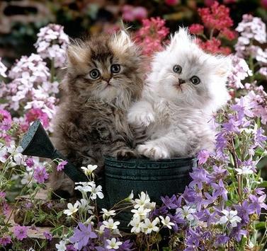 Kittens screenshot 8