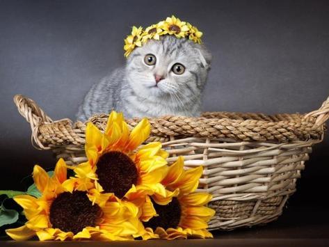 Kittens screenshot 9