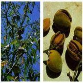 Edible and Medicinal Plants icon