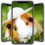 Hamster Wallpapers icon