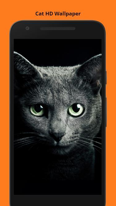 Unduh 900+ Wallpaper 3d Cat