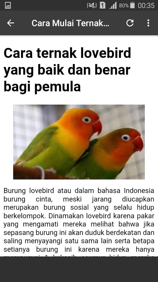 Tips Dan Suara Masteran Lovebird For Android Apk Download