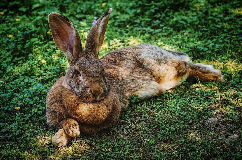 Rabbit Cute Bunny Bunnies Wallpaper For Android Apk