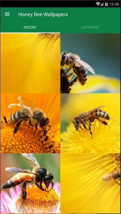 Honey Bee Animal Wallpaper For Android Apk Download