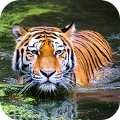 Wild Life Photo Frame icon