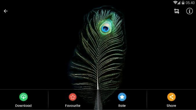 Black Feather Wallpaper Hd For Android Apk Download