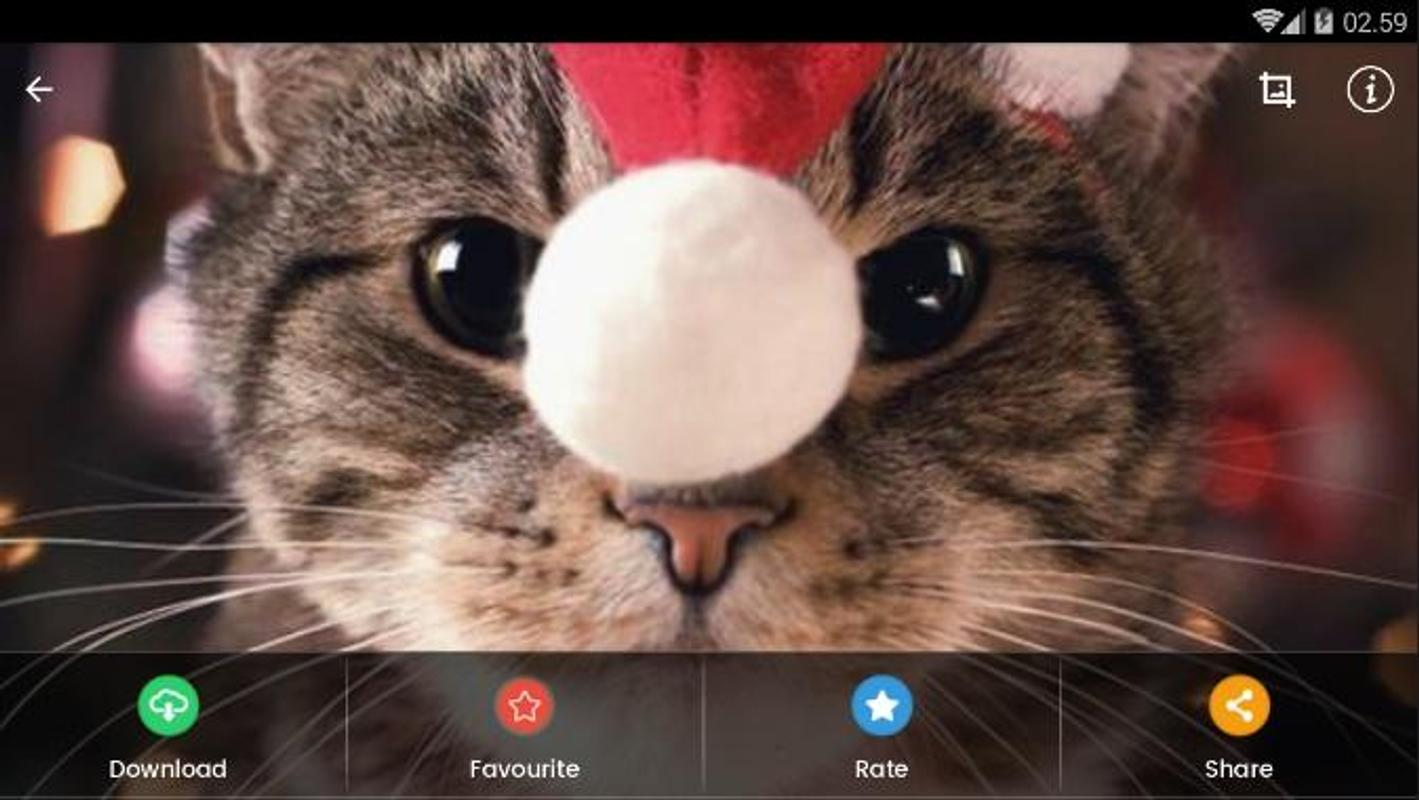 Christmas Cat Wallpaper Hd For Android Apk Download