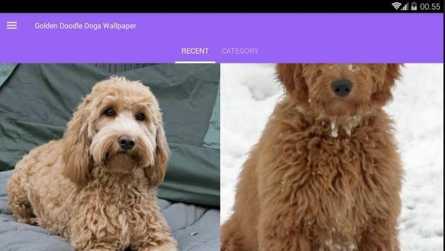 Golden Doodle Dog Wallpaper screenshot 6