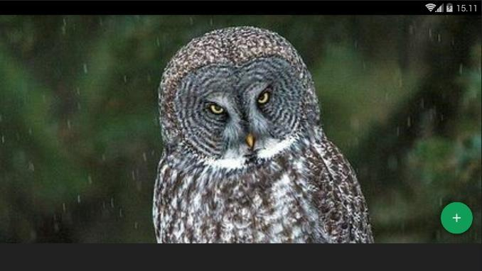 Great Gray Owl Wallpaper For Android Apk Download