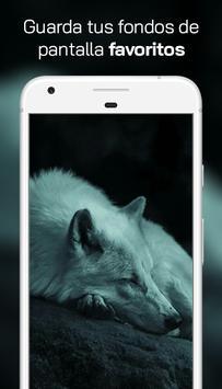 Lobo Fondos de Pantalla スクリーンショット 2