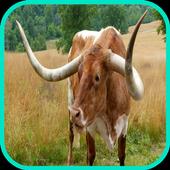 Cow Wallpaper icon