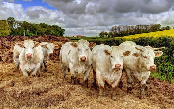 Cow Wallpaper screenshot 8