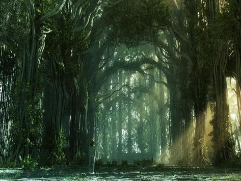 Forest Wallpaper screenshot 4