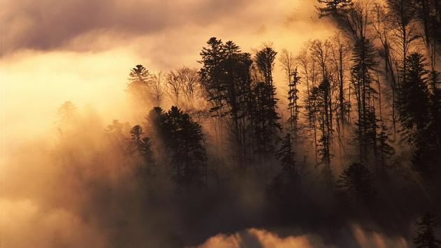 Forest Wallpaper screenshot 3