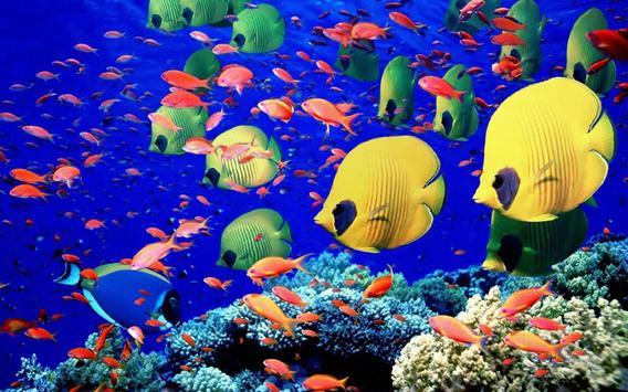 Fish Wallpaper screenshot 5