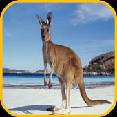 Kangaroo Wallpaper icon