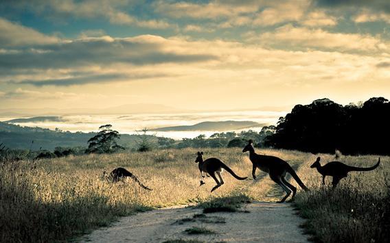 Kangaroo Wallpaper screenshot 1