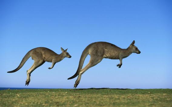 Kangaroo Wallpaper screenshot 9