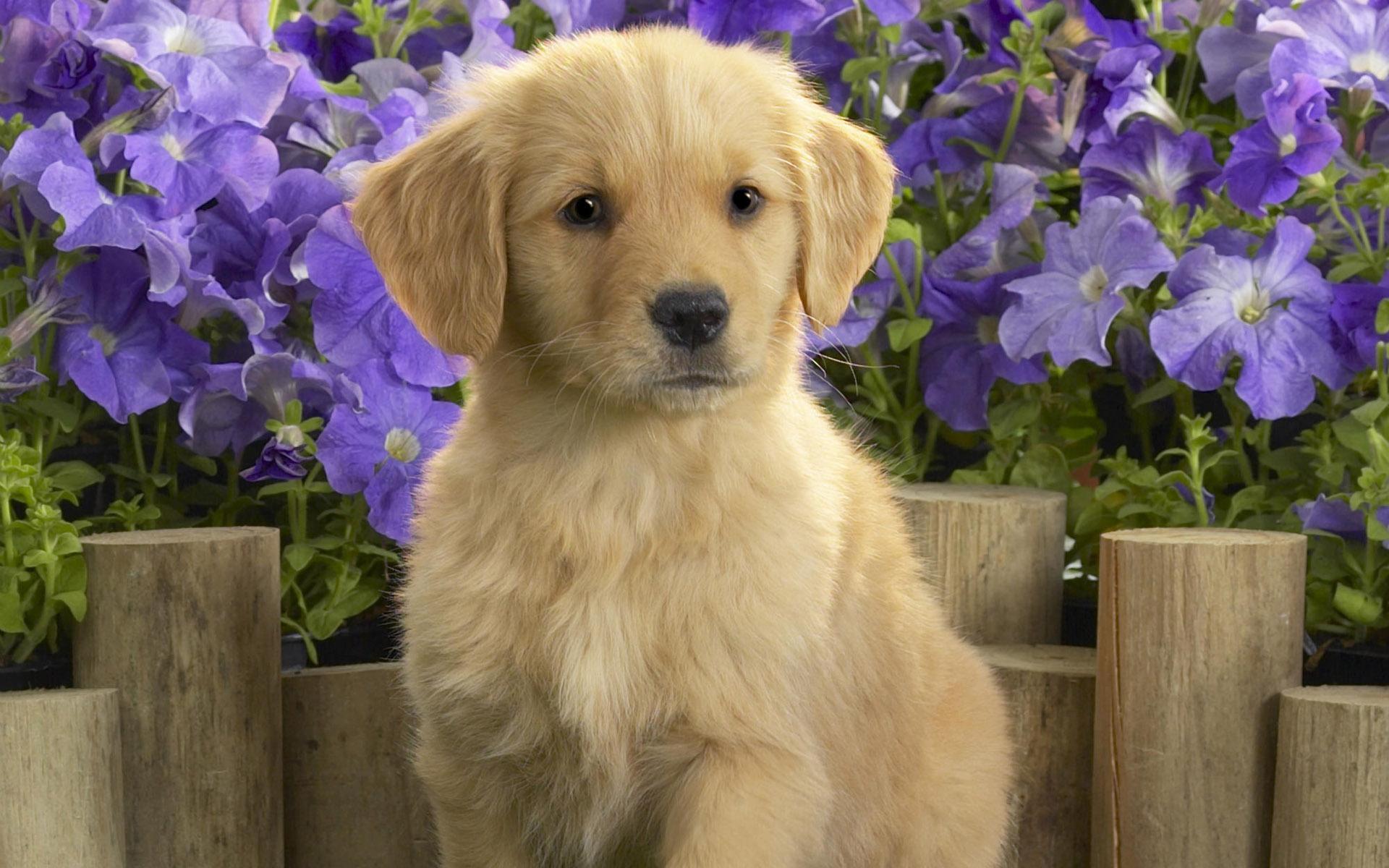 Картинки на телефон собаки и щенки
