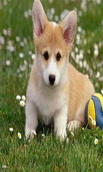 Cute Puppy Dog Wallpapers screenshot 3