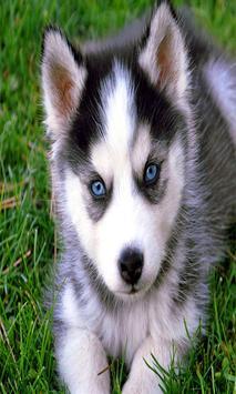 Cute Puppy Dog Wallpapers screenshot 1