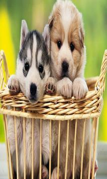 Cute Puppy Dog Wallpapers screenshot 7