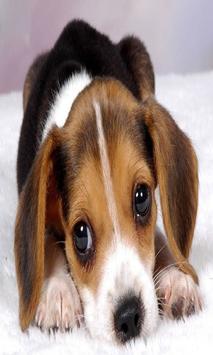 Cute Puppy Dog Wallpapers screenshot 4