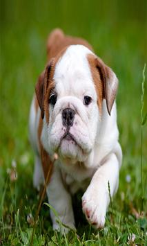 Cute Puppy Dog Wallpapers screenshot 6