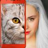 Yavru kedi: Sen hangi kedisin? Eşek Şakası simgesi