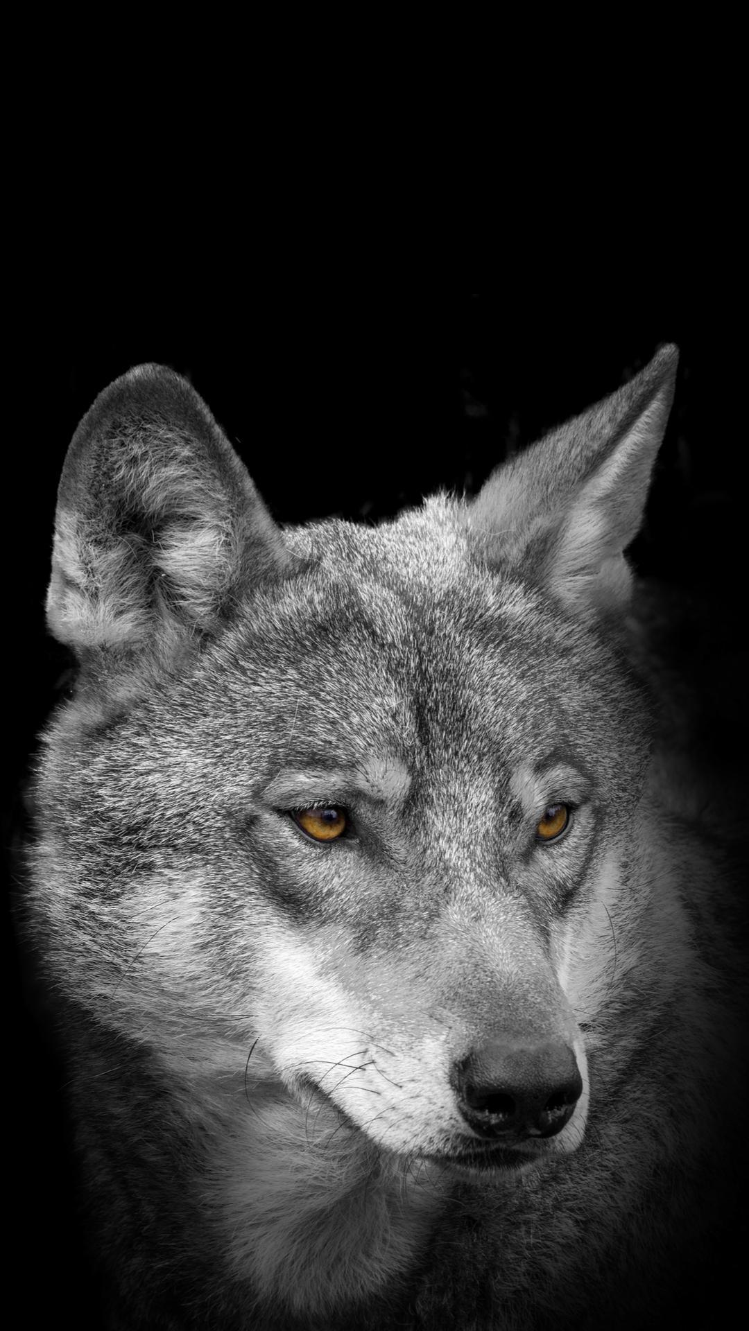 Android 用の 狼の壁紙 Apk をダウンロード
