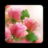 Pink Rose Wallpaper icon