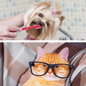 Dogs Cats and Me icon