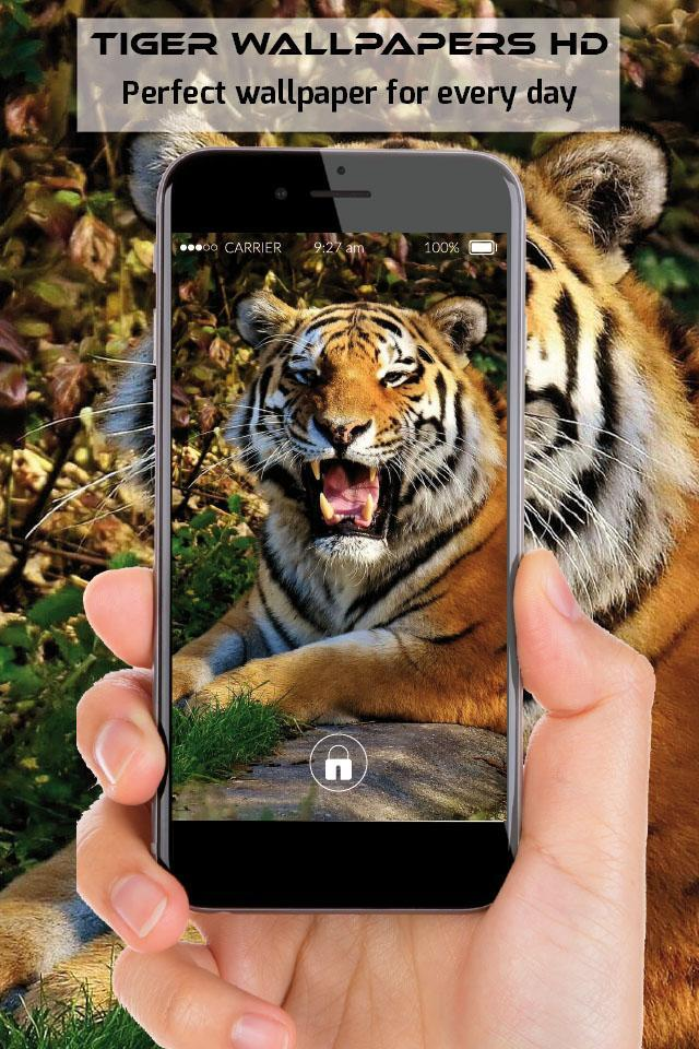 Tiger Wallpapers Free Full Hd Images For Phone Für Android