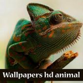 wallpaper hd animal icon