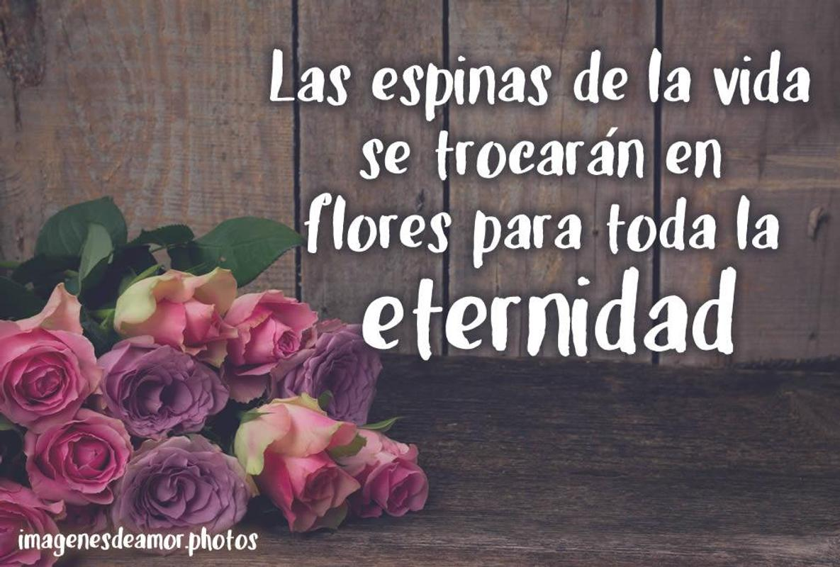 Wallpaper Flores Con Frases For Android Apk Download