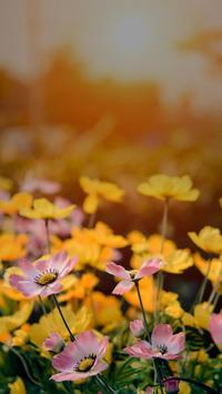 Beautiful Spring Garden APUS Live Wallpaper screenshot 5