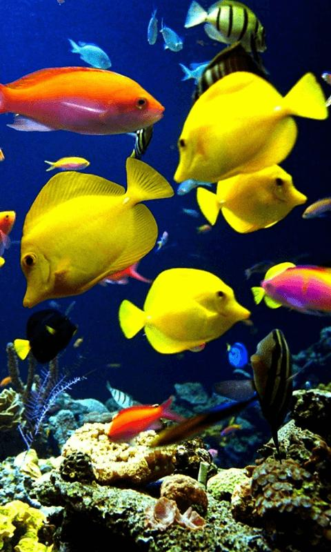 Aquarium Hd Wallpaper Background For Android Apk Download