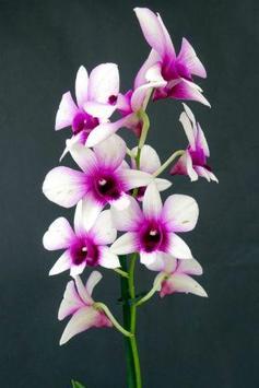 Orchid Wallpapers screenshot 4