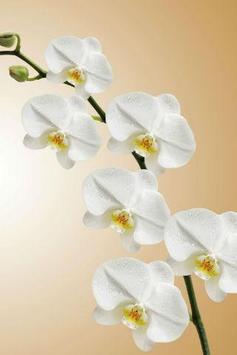 Orchid Wallpapers screenshot 2