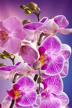Orchid Wallpapers screenshot 3