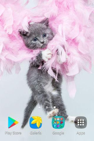 Puppy Kitten Wallpapers For Android Apk Download