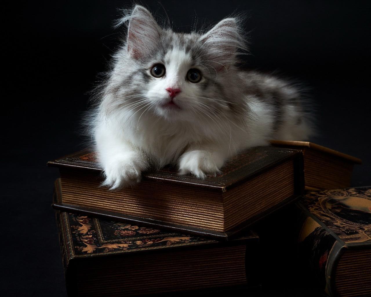 Android 用の 面白い猫の壁紙 Apk をダウンロード