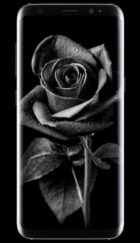 Dark Flower Hd Wallpaper Lock Screen For Android Apk Download
