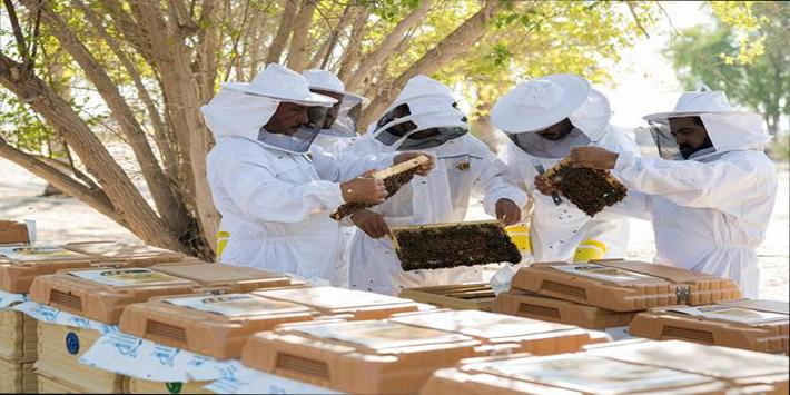 تربية النحل وانتاج العسل poster
