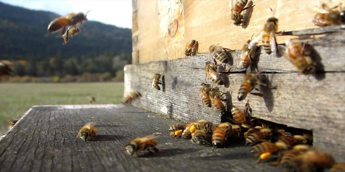 تربية النحل وانتاج العسل screenshot 1