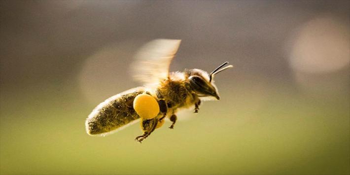 تربية النحل وانتاج العسل screenshot 4
