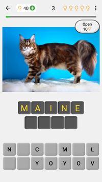 Cats Quiz poster